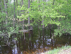 Vernal Pool Complex Restored Wetland Forest